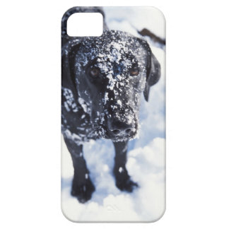 Dog covered in snow iPhone 5 covers