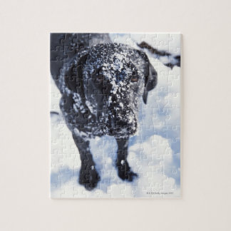 Dog covered in snow jigsaw puzzle