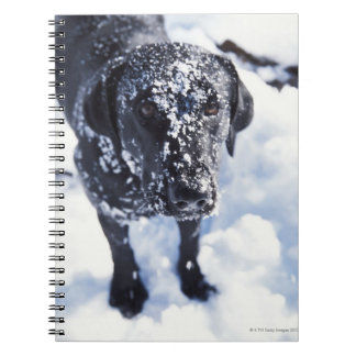 Dog covered in snow notebooks