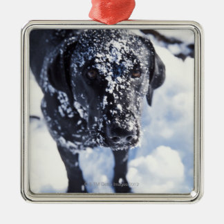 Dog covered in snow Silver-Colored square decoration
