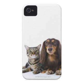 Dog (Dachshund) and cat (Japanese cat) on white iPhone 4 Cover