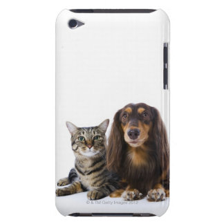Dog (Dachshund) and cat (Japanese cat) on white iPod Touch Covers