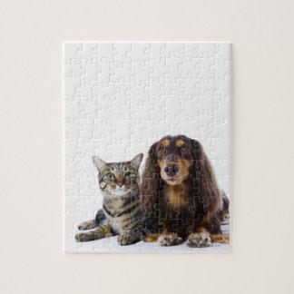 Dog (Dachshund) and cat (Japanese cat) on white Jigsaw Puzzle