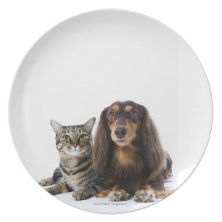 Dog (Dachshund) and cat (Japanese cat) on white Plate