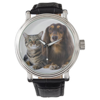 Dog (Dachshund) and cat (Japanese cat) on white Watch