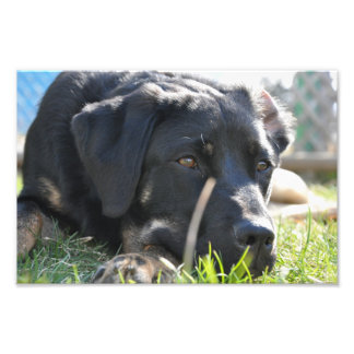 Dog Days Photo Print
