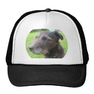 dog design cap