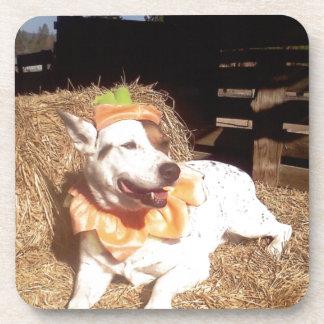 dog dogs fun funny Luna Says Halloween humor Coaster