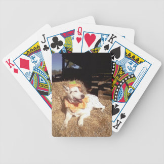 dog dogs fun funny Luna Says Halloween humor Card Deck