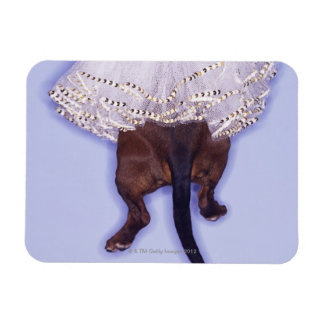 Dog dressed up rectangular photo magnet
