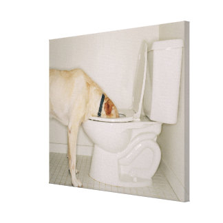 Dog drinking out of toilet gallery wrap canvas