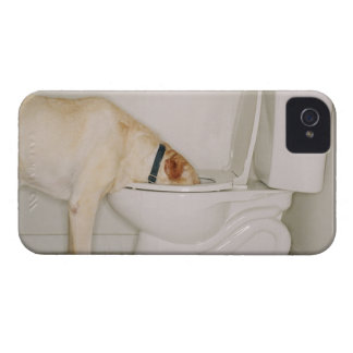 Dog drinking out of toilet iPhone 4 cover