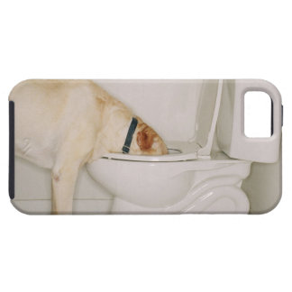 Dog Drinking out of Toilet iPhone 5 Cases
