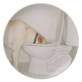 Dog drinking out of toilet party plate