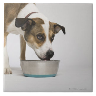 Dog eating from bowl large square tile