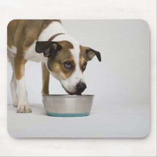 Dog eating from bowl mouse mat