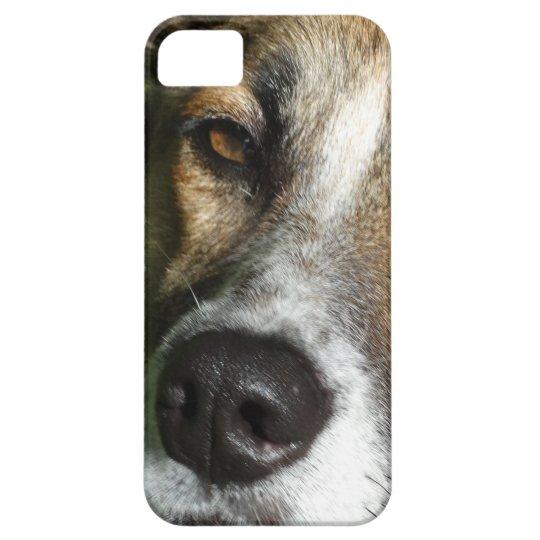 Dog Face Close Up iPhone SE + iPhone