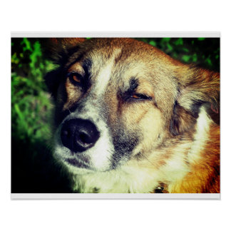 Dog face Photo Value Poster Paper (Matte)