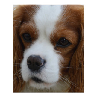 Dog 11.5 Cm X 14 Cm Flyer