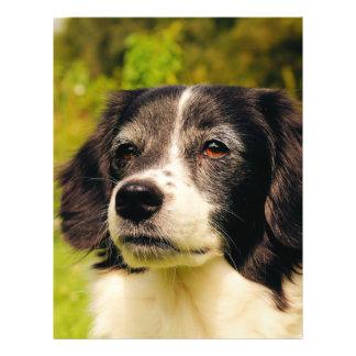 Dog 21.5 Cm X 28 Cm Flyer