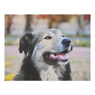 Dog Flyer