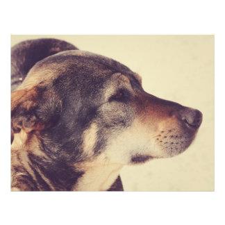 Dog Flyer Design