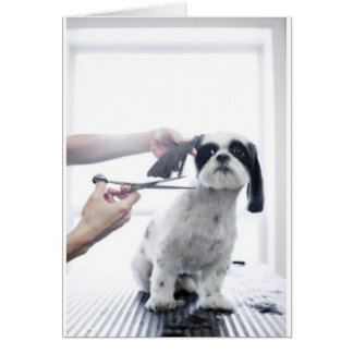 Dog Groomer Card