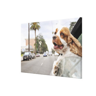Dog hanging head out of car window canvas print
