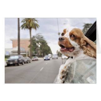 Dog hanging head out of car window greeting card