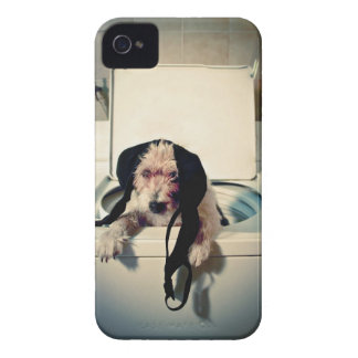 Dog helping out with the wash Case-Mate iPhone 4 cases
