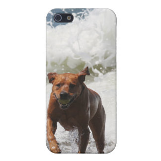 Dog - Here I Come iPhone 5 Cover