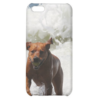 Dog - Here I Come iPhone 5C Case