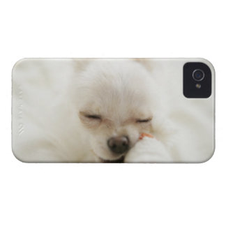 Dog holding toy in mouth Case-Mate iPhone 4 case
