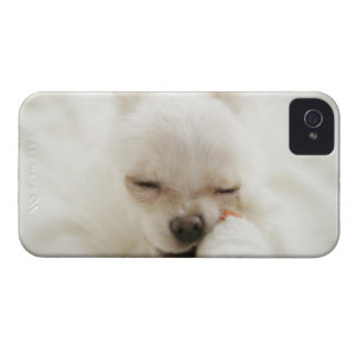 Dog holding toy in mouth iPhone 4 covers