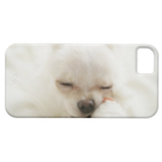 Dog holding toy in mouth iPhone 5 case