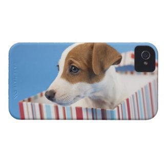 Dog in a Gift Box iPhone 4 Case-Mate Case