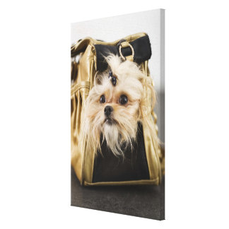 Dog in a purse canvas print