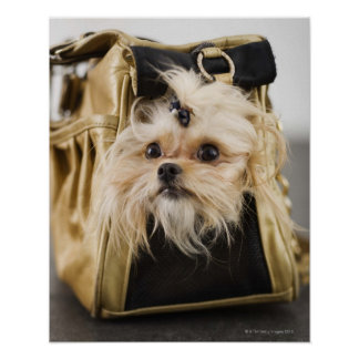 Dog in a purse poster