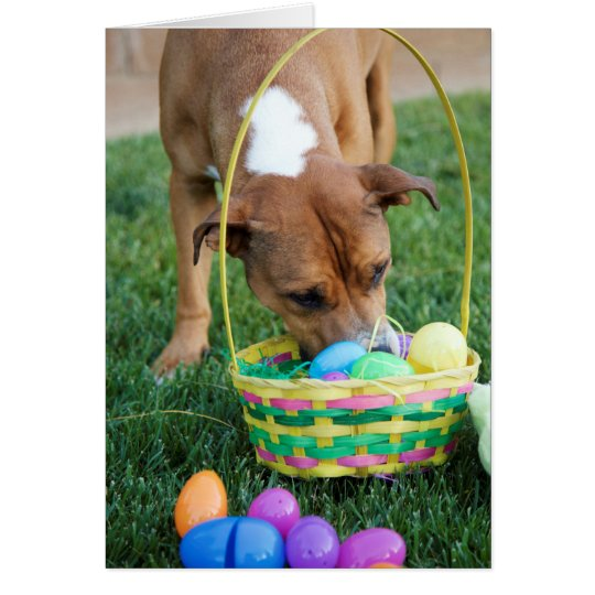 Dog in Basket Easter Card