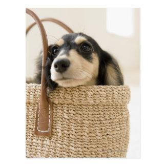 Dog in basket post card