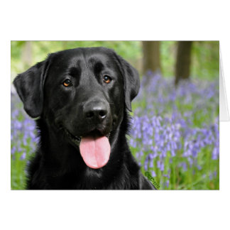Dog in Bluebells Greeting Card