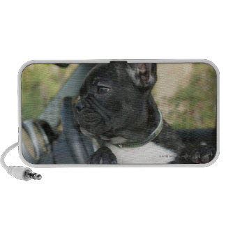 Dog in car portable speakers