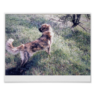 Dog in countryside poster