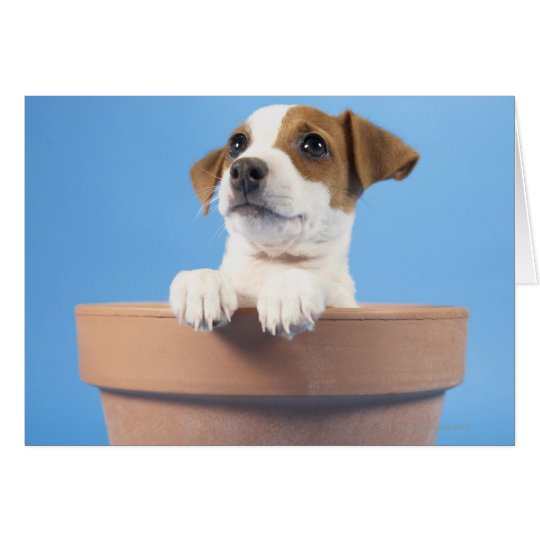 Dog in flowerpot card