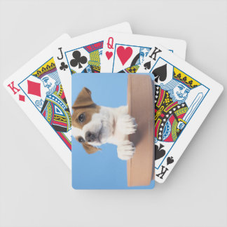 Dog in flowerpot card decks