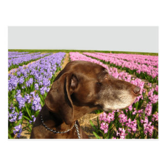 dog in front of a spring flower field postcard