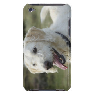 Dog in heath land. iPod touch Case-Mate case