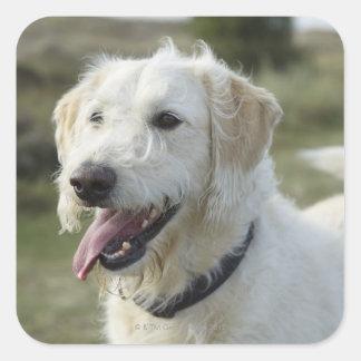 Dog in heath land. square sticker