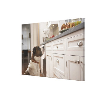 Dog in kitchen looking at food on counter canvas print