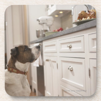 Dog in kitchen looking at food on counter coaster
